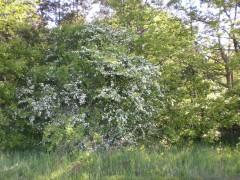 Kvitnúce stromy za pozemkom
