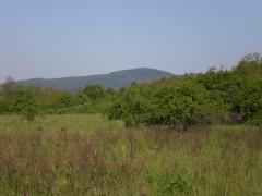 Výhľad na Malé Karpaty