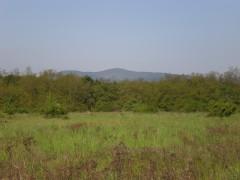 Výhľad z pozemku na Malé Karpaty