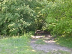 Vstup do lesa za pozemkom