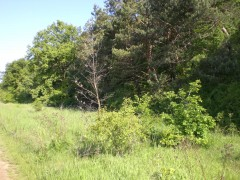 Les za pozemkom